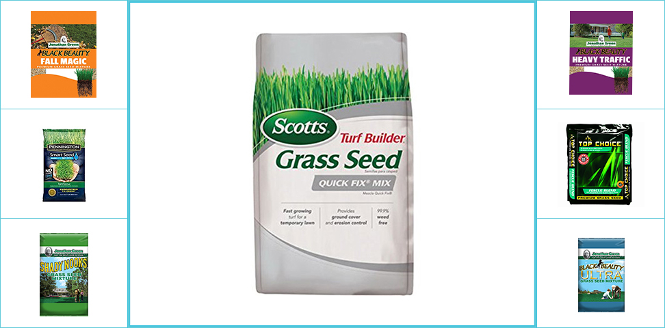 Top 10 Best Rated Grass Seed Reviews in 2019